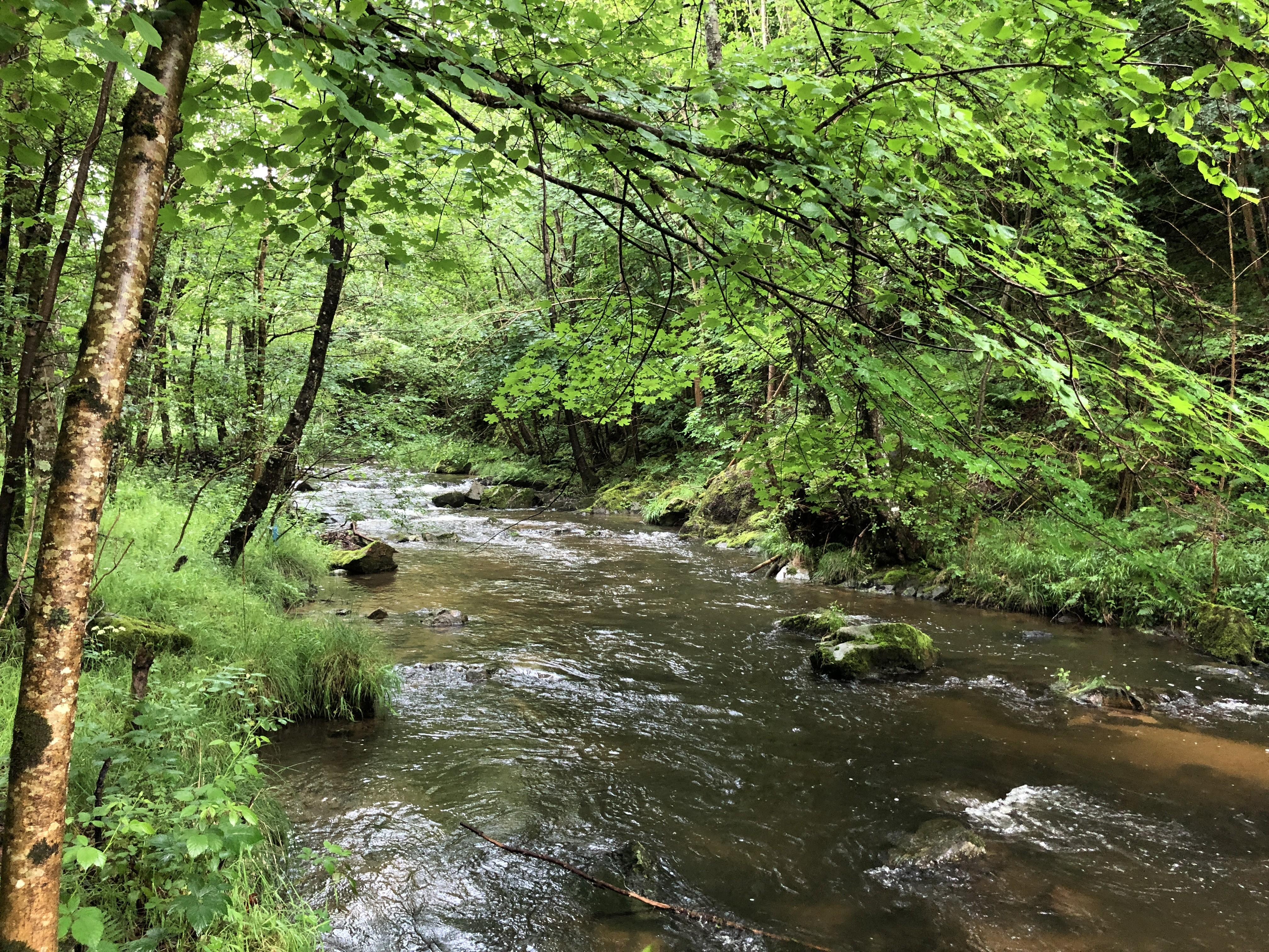 Près du confluent du ruisseau de Tracol