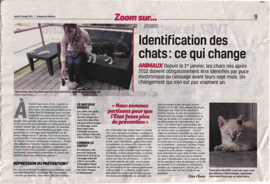 Identification chats 21 jan 21