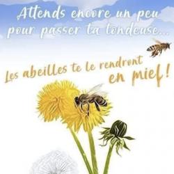Ne tondez pas les abeilles feront du miel carre e